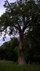 Bat tree assessment